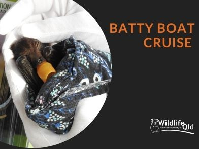 Batty Boat Cruise