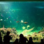 Let's hope our ancestors' enjoyment of Australian aquatic life won't rely solely on aquariums. Sea Life Sydney Aquarium, Darling Harbour. - Photo © Sacha Fernandez
