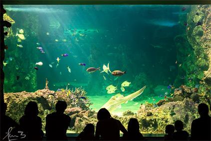 Let's hope our ancestors' enjoyment of Australian aquatic life won't rely solely on aquariums. Sea Life Sydney Aquarium, Darling Harbour. - Photo © Sacha Fernandez