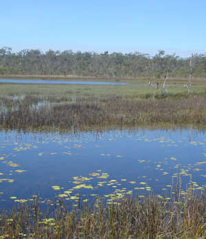 Wildlife Queensland welcomes the drive to protect our water resources. Photo © Wildlife Queensland