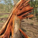 Environmental Disaster Photo © Wildlife Queensland