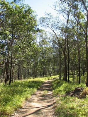 Photo © Wildlife Queensland