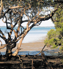 Will the recent floods bring silt and threaten the health of Moreton Bay?  Photo © Wildlife Queensland