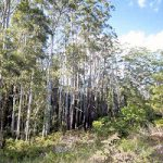 Diddillibah bushland, Sunshine Coast  Photo © Holly Bryant