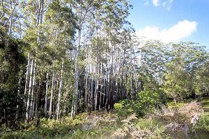 Diddillibah bushland, Sunshine Coast  Photo © Holly Bryant