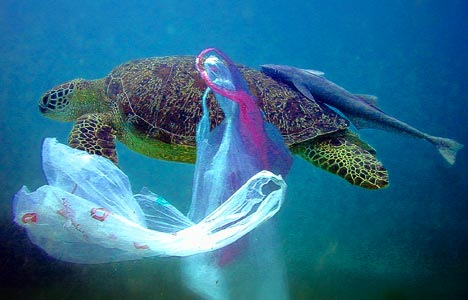 Wildlife Queensland welcomes two recent outcomes as significant steps forward in reducing litter and the threats it poses to our native and endangered wildlife - Photo © Surfrider Foundation