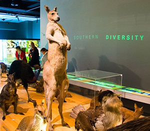 Australian biodiversity is in decline - Photo © Kenneth Pinto