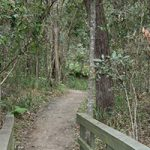 Springwood Conservation Park - Photo © www.queenslandholidays.com.au