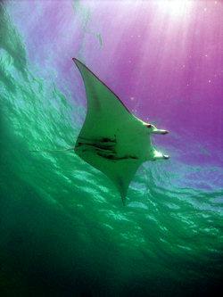 Great Barrier Reef - still at risk! Photo © Meg Green