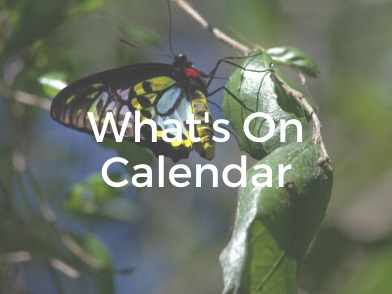 What's On Calendar